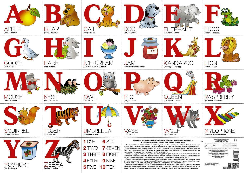 Английский детский алфавит в картинках